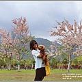 鹿鳴溫泉酒店花旗木-2018-04-25.jpg