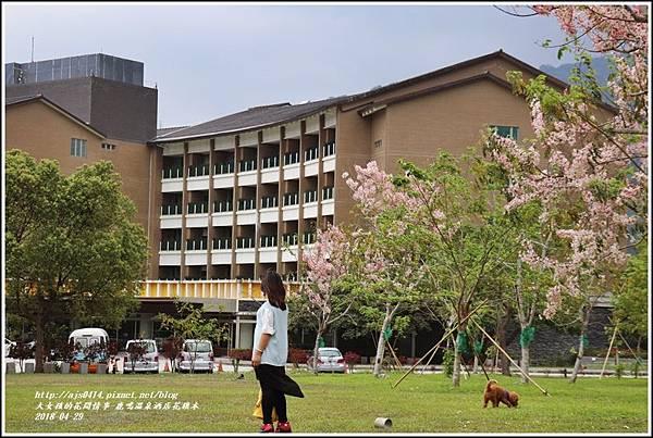 鹿鳴溫泉酒店花旗木-2018-04-29.jpg