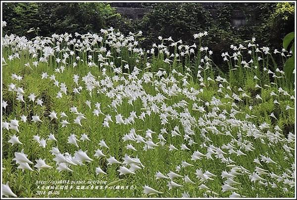 瑞穗泛舟遊客中心(鐵炮百合)-2018-05-03.jpg
