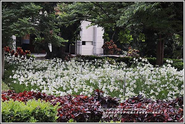 瑞穗泛舟遊客中心(鐵炮百合)-2018-05-13.jpg