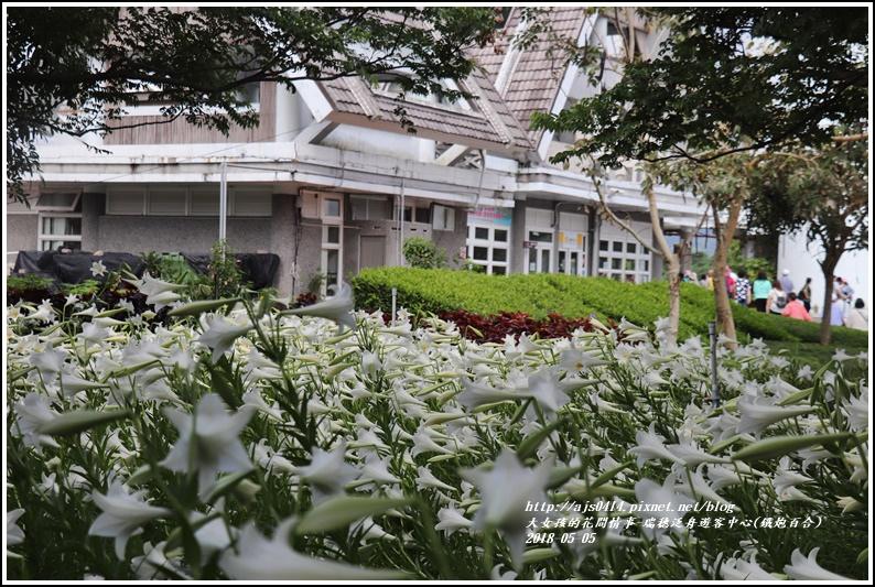 瑞穗泛舟遊客中心(鐵炮百合)-2018-05-21.jpg