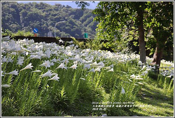 瑞穗泛舟遊客中心(鐵炮百合)-2018-05-36.jpg