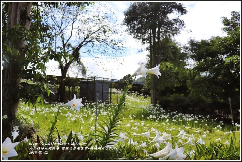 瑞穗泛舟遊客中心(鐵炮百合)-2018-05-43.jpg