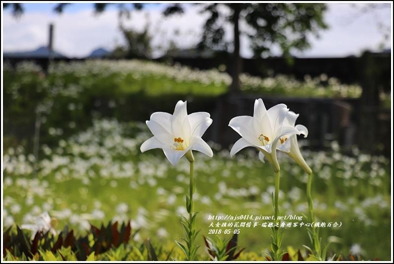 瑞穗泛舟遊客中心(鐵炮百合)-2018-05-45.jpg