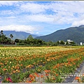 嘉德萱草園-2018-05-05.jpg