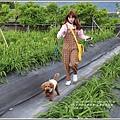 嘉德萱草花田-2018-04-05.jpg
