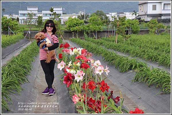 嘉德萱草花田-2018-04-09.jpg