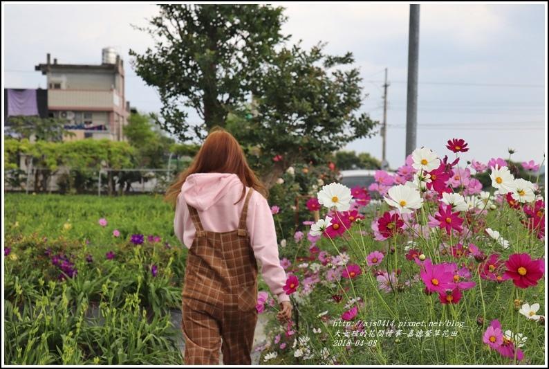 嘉德萱草花田-2018-04-23.jpg