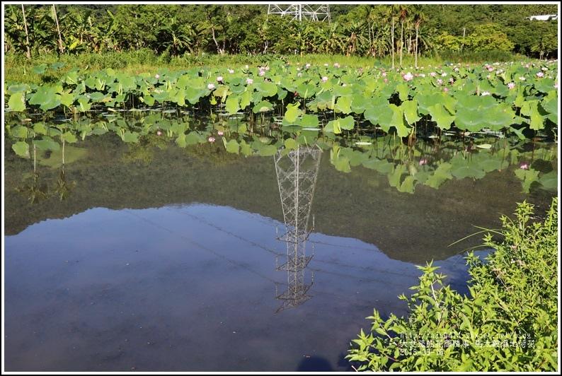 馬太鞍濕地荷花-2018-05-23.jpg