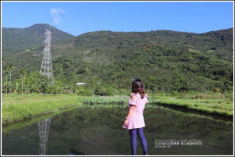 馬太鞍濕地荷花-2018-05-24.jpg