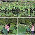 馬太鞍濕地荷花-2018-05-25.jpg