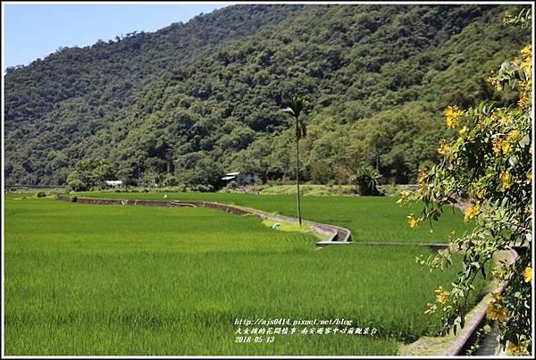 南安遊客中心觀景台稻田-2018-05-02.jpg