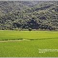 南安遊客中心觀景台稻田-2018-05-05.jpg