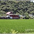 南安遊客中心觀景台稻田-2018-05-07.jpg