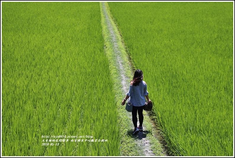 南安遊客中心觀景台稻田-2018-05-11.jpg