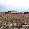 紫錐菊-2018-06-01.jpg