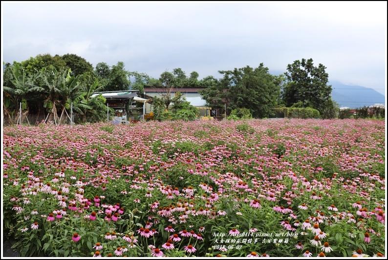 紫錐菊-2018-06-22.jpg