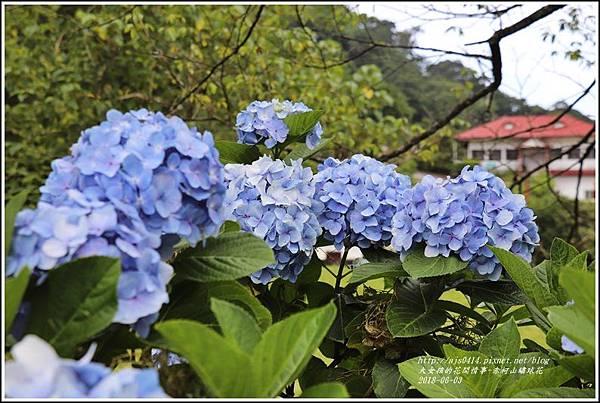 赤柯山繡球花-2018-06-06.jpg