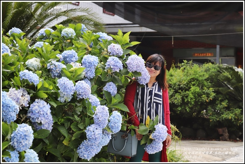 赤柯山繡球花-2018-06-10.jpg