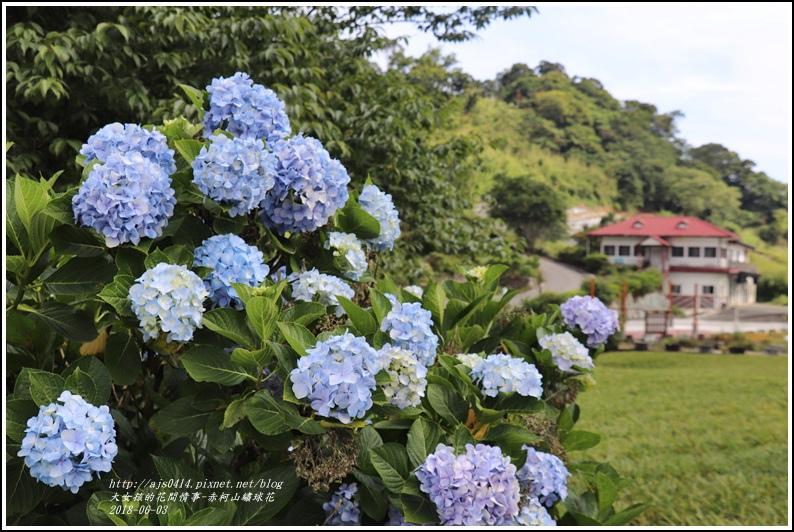 赤柯山繡球花-2018-06-22.jpg