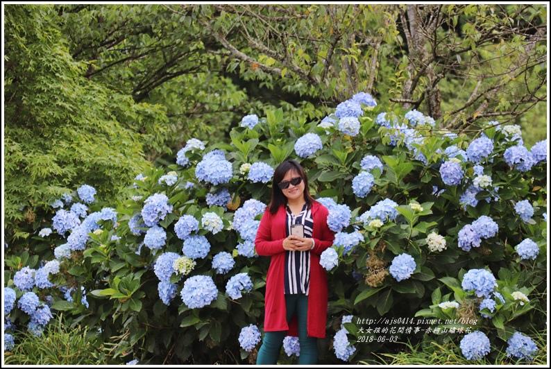 赤柯山繡球花-2018-06-25.jpg
