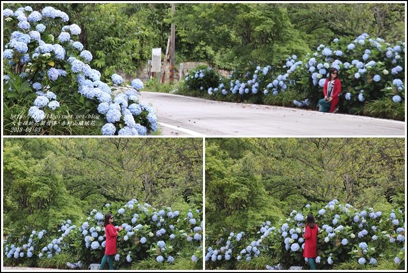 赤柯山繡球花-2018-06-27.jpg