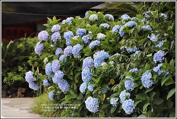 赤柯山繡球花-2018-06-29.jpg