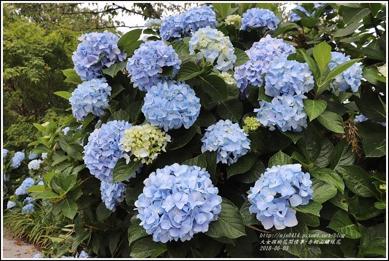赤柯山繡球花-2018-06-34.jpg