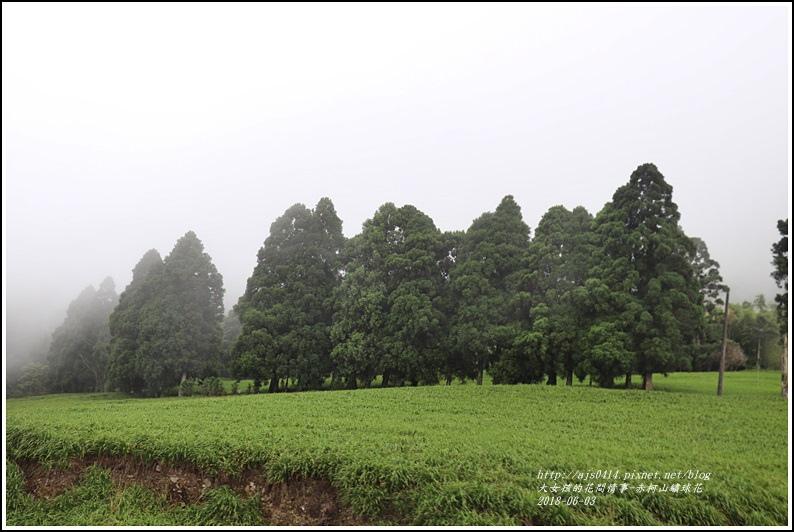 赤柯山繡球花-2018-06-37.jpg
