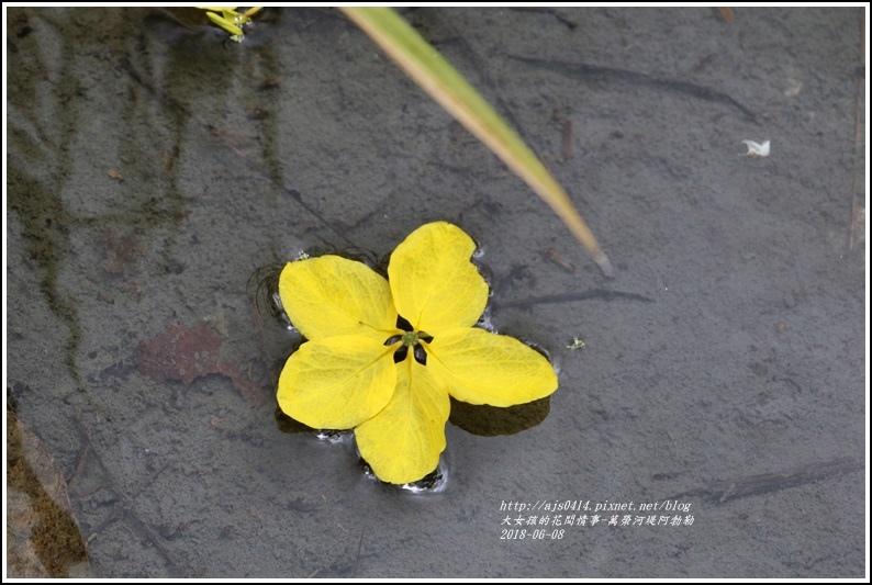 萬榮河堤阿勃勒-2018-06-18.jpg