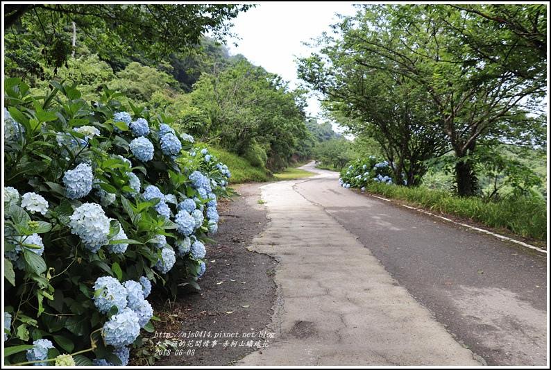 赤柯山繡球花-2018-06-60.jpg