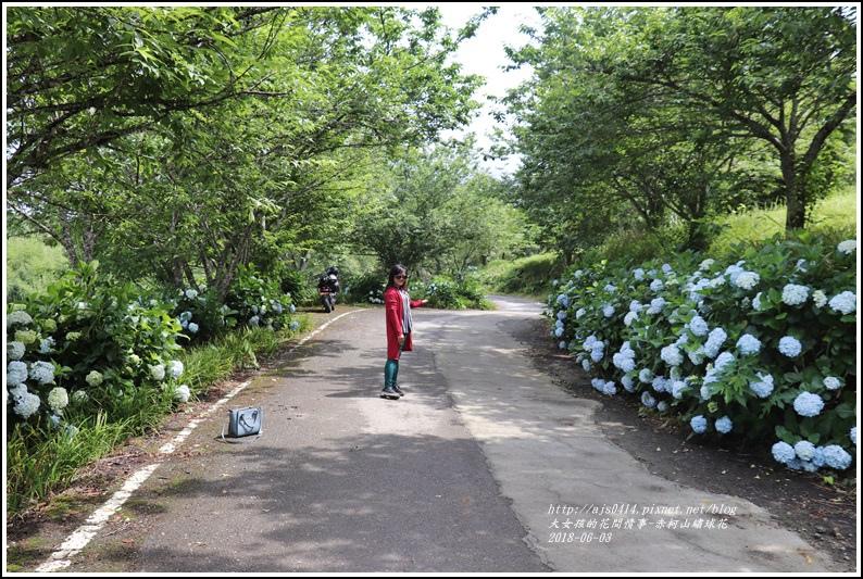 赤柯山繡球花-2018-06-67.jpg