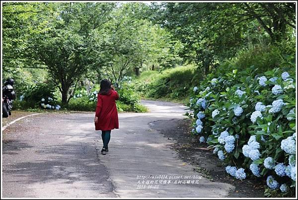 赤柯山繡球花-2018-06-68.jpg