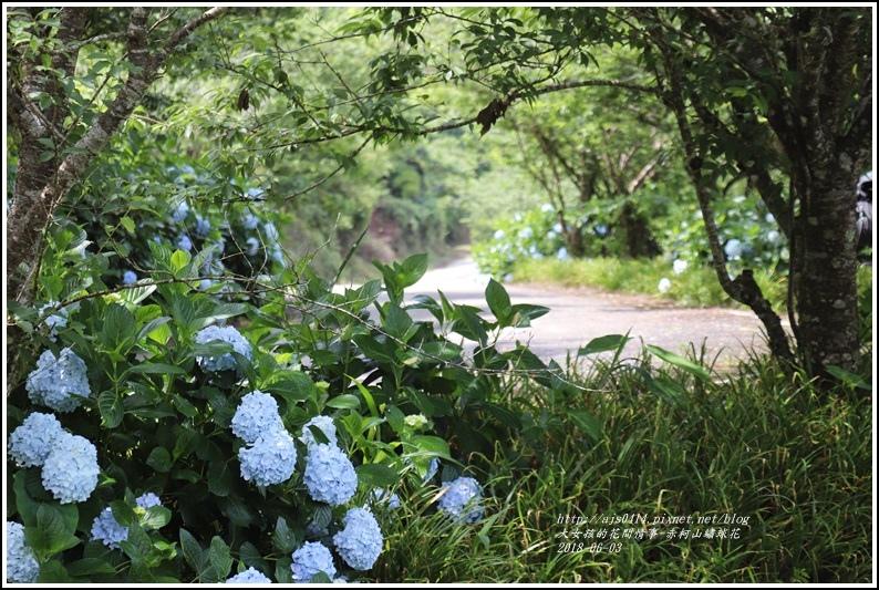赤柯山繡球花-2018-06-74.jpg
