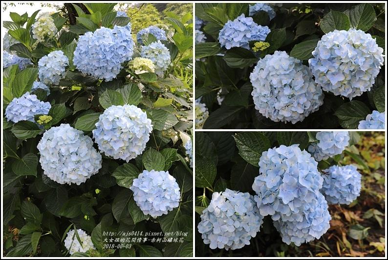 赤柯山繡球花-2018-06-76.jpg