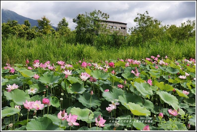 大富荷花田(平地森林南環道)-2018-06-13.jpg