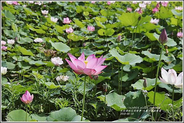 大富荷花田(平地森林南環道)-2018-06-15.jpg