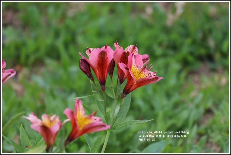 清境水仙百合-2018-06-08.jpg
