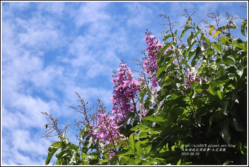大花紫薇-2018-06-02.jpg