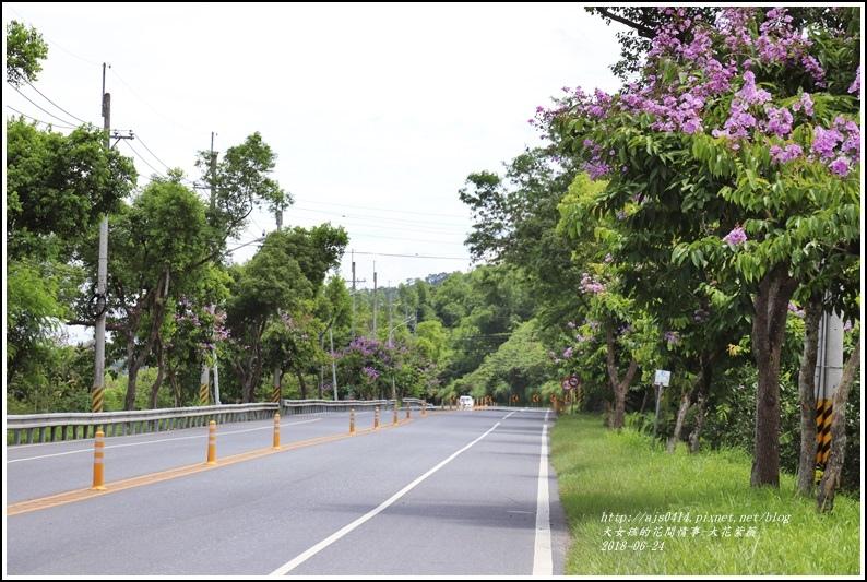 大花紫薇-2018-06-05.jpg