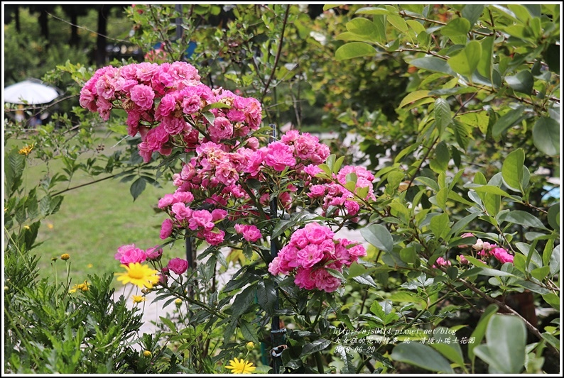 統一清境小瑞士花園-2018-06-30.jpg