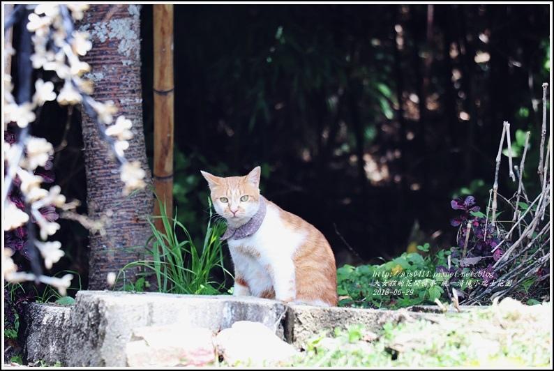 統一清境小瑞士花園-2018-06-52.jpg