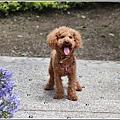 統一清境小瑞士花園-2018-06-62.jpg