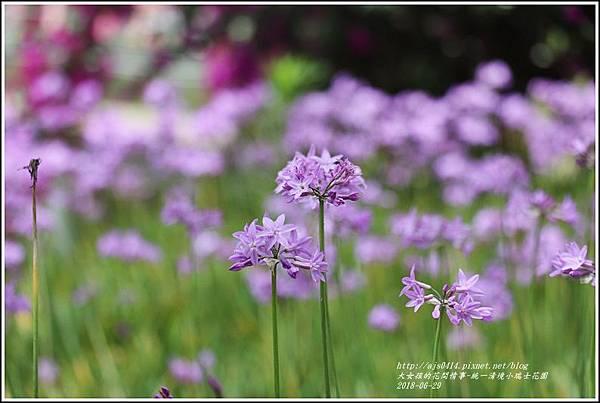 統一清境小瑞士花園-2018-06-63.jpg