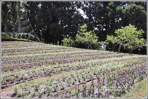 統一清境小瑞士花園-2018-06-94.jpg