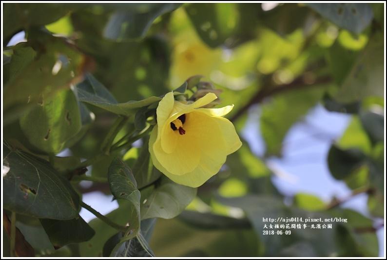 北濱公園-2018-06-07.jpg