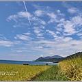 新社海稻田-2018-07-24.jpg