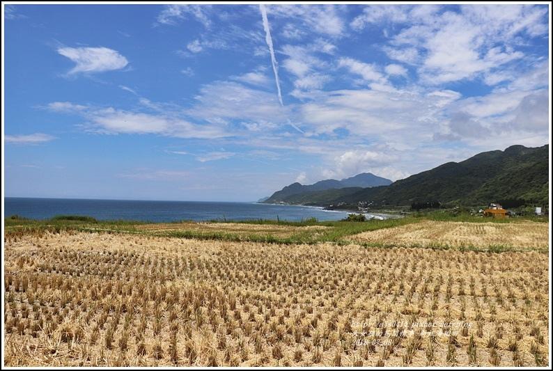新社海稻田-2018-07-29.jpg