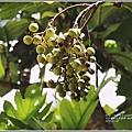 海岸咖啡Costal coffee-2018-07-10.jpg
