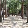 江原道春川市南怡島-2018-08-06.jpg